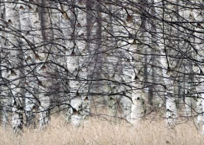 trädstammar i ett kaos
