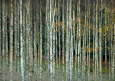 trädstammar med dubbelexponering