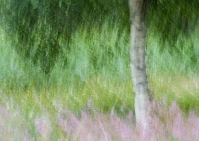 träd med rörelseokärpa