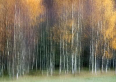 träd under årstiden höst