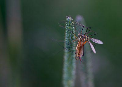 två insekter som sitter ihop