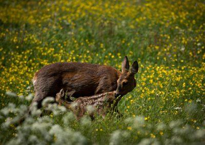 deer_kid